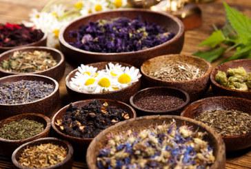 Heilkräuter: Kräuter für Küche und Gesundheit