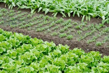 Gesundheit aus dem Garten