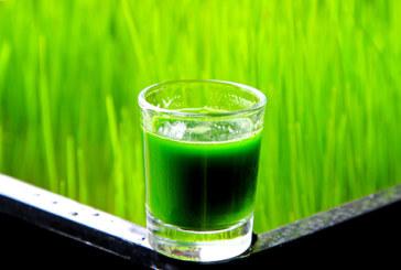 Weizengras – Warum es so gesund ist!