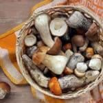 Endlich Herbst: auf in die Pilzsaison!