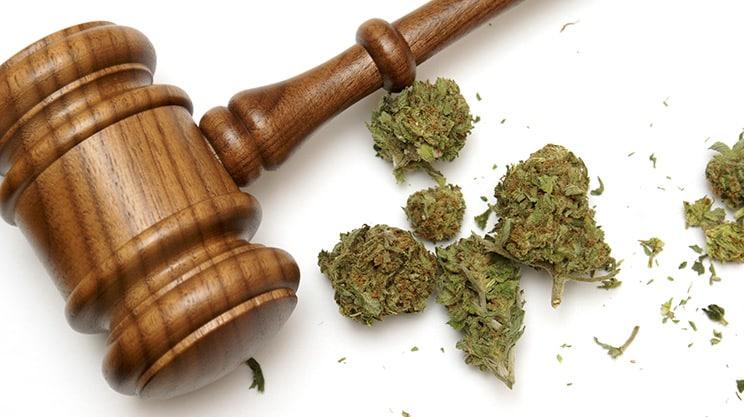 Cannabis – Mit Hanf gegen den Schmerz
