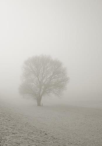 winterdepression-nur-ein-saisonales-phaenomen2