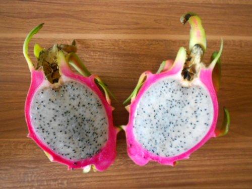 Pitahaya Rote Drachenfrucht 20 Samen *Weißfleischig*+ (Anleitung zur Aufzucht)