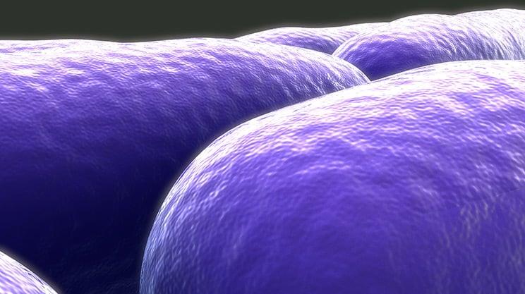 Effektive Mikroorganismen – für ein gesundes Leben
