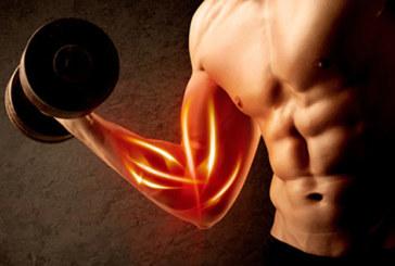 Muskeln gezielt aufbauen – auf die Ernährung kommt es an