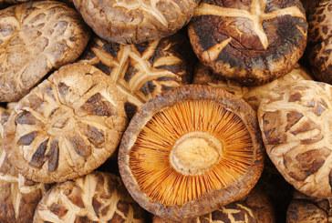 Sind Pilze die neue Wunderwaffe gegen Depressionen?