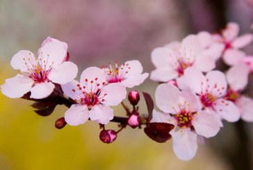 <span class=ns>News:</span> Lässt der Duft von Blüten den Krebs verschwinden?