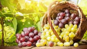Traubenkernöl: Das kostbare Geschenk aus der Natur