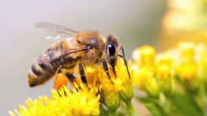 Bienenstich - Was nun zu tun ist