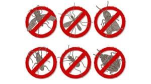 Insektenstich - die lästige Plage in den Sommermonaten