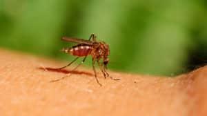 Mückenstich - lästig, aber ungefährlich